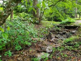 Rambling Creek