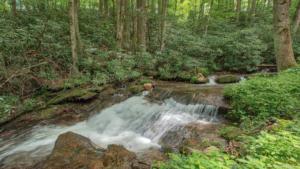 Brushy Creek (10)