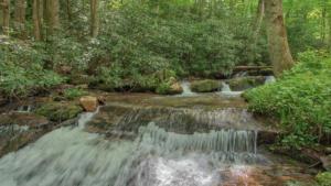 Brushy Creek (11)