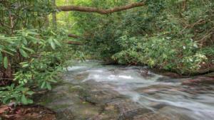 Brushy Creek (12)