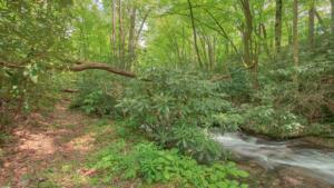 Brushy Creek (13)