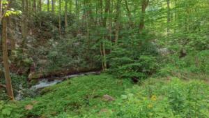 Brushy Creek (14)