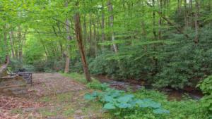 Brushy Creek (15)