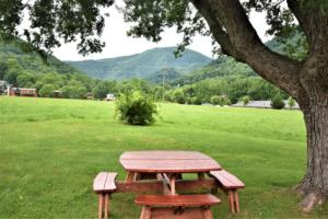 246 Campbell Creek Rd Maggie-large-011-024-View from the Picnic Table-1500x1000-72dpi
